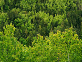 Spring forest texture with different shades of green. Lot of trees on the mountain hill as a pattern. Wild nature landscape