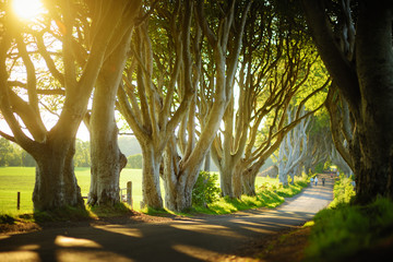 The Dark Hedges, an avenue of beech trees along Bregagh Road in County Antrim. Tourist attractions in Nothern Ireland.