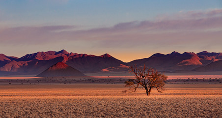 Namib Rand Reserve national park at sunset - waste and sparsely populated area at the end of the desert with acacia tree