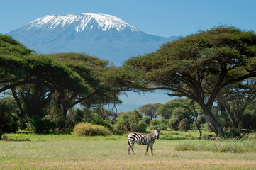 Papiers peints Zebra Kenya, Amboseli, Kilimanjaro, zebra