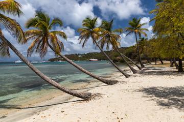 Saint Vincent and the Grenadines, Britannia bay beach, coconut palms, Mustique