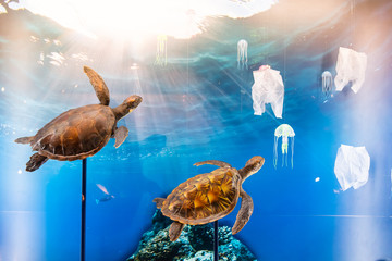 Exhibition Sea turtles are swimming under the deep sea. See plastic bags and jellyfish