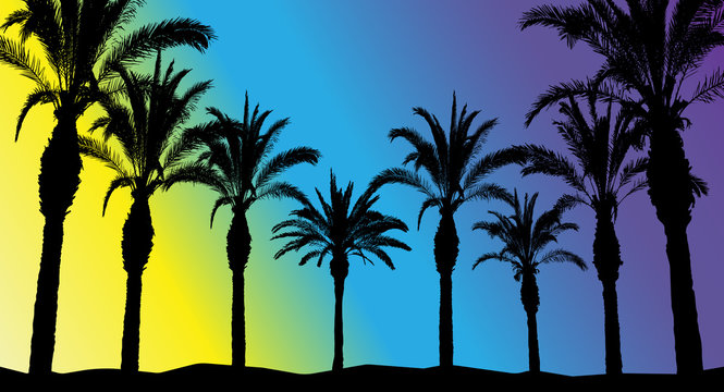 Silhouettes of beautiful palm trees on a bright background, meaning morning, day and night