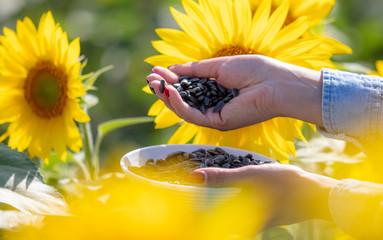 Foto op Canvas Meloen Black seeds in the hands of the girl