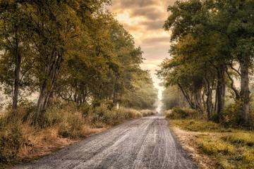 droga leśna we mgle
