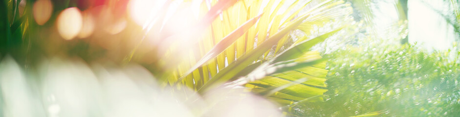 Palm green tropical leaf in nature jungle on blue sky