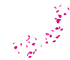 Violet rose petals fly in a circle. The center free space for Your photos or text