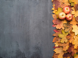 Wall Mural - Seasonal autumn background. Frame of colorful maple leaves and apples.