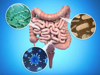 Bacteries of human intestine, Intestinal flora gut health concept.
