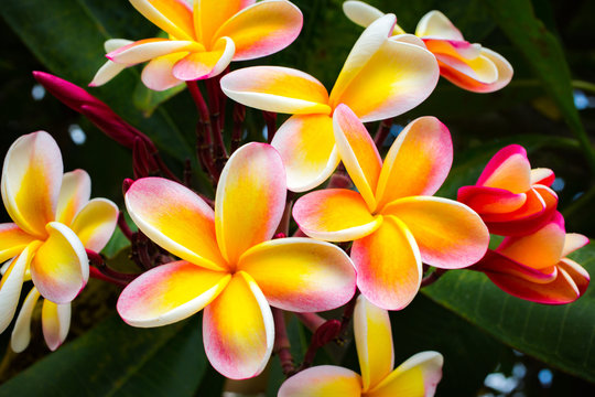 Beautiful Tropical Flowers in Hawaii