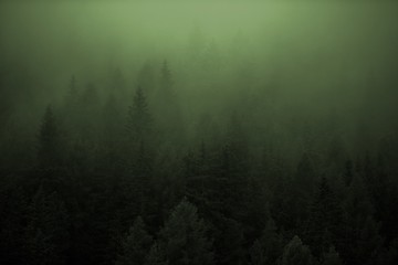 Wall Mural - Dense Forest Foggy Weather