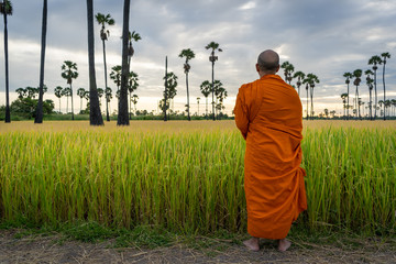 Buddhist monk standing at the green rice field rural village