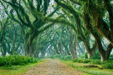 Papiers peints Forets Beautiful green trees scenery in De Djawatan forest