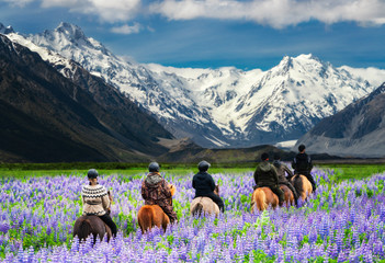 Travelers ride horses in lupine flower field, overlooking the beautiful landscape of Mt Cook National Park in New Zealand. Lupins hit full bloom in December to January which is summer of New Zealand. Wall mural