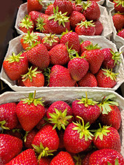 Close up view of fresh strawberries with a beautiful shine and deep red color