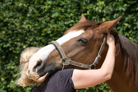 physical therapy for horse, Exercise and regeneration for horses, woman is working with horse for therapy