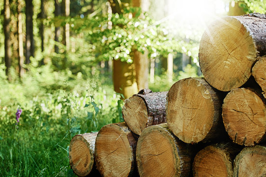 Gefällte Baumstämme gestapelt im Wald mit Sonnenstrahlen im Hintergrund