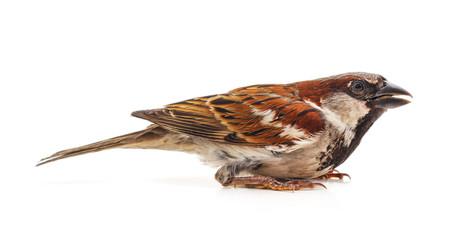 One little sparrow.
