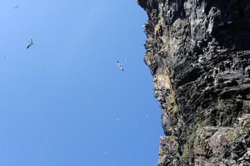 Brutfelsen auf der Insel Runde in Norwegen