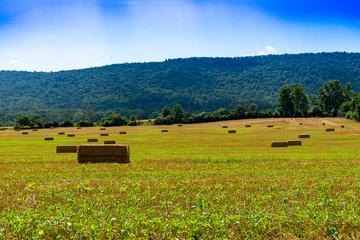 Bales of hay on farm field