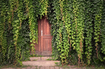 Door with ivy stock images. Beautiful Prague Place. Green ivy with door. Wooden door with ivy. Kampa Park in Prague. Romantic garden still life