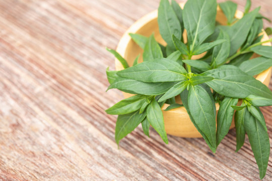 Green Andrographis paniculata or green chireta on wooden table. Herb concept