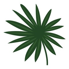 Fan palm icon. Cartoon of fan palm vector icon for web design isolated on white background