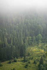 Foggy mysterious forest growing on hills - gradient visible to obscoure