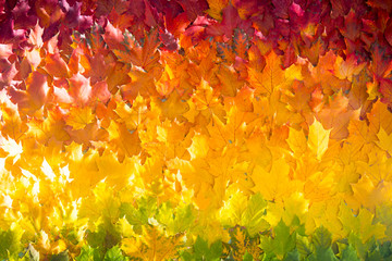 Red and orange autumn leaves background. Outdoor. Colorful backround image of fallen autumn leaves Wall mural