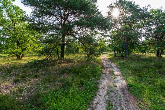 Behringer Heide in der Lüneburger Heide Wanderweg