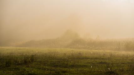 foggy morning in a meadow in a rural hilly region. Fototapete