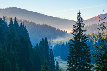 spruce forest on the hill in the morning. glowing fog in the distant valley. beautiful autumn nature scenery at sunrise