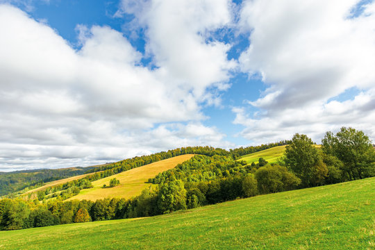 beautiful countryside in mountain. trees on grassy hills. sunny september weather with cloudy sky. wonderful nature background