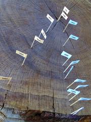 Jahresringe in einem Baumstamm, zeugen vom Lauf der Zeit