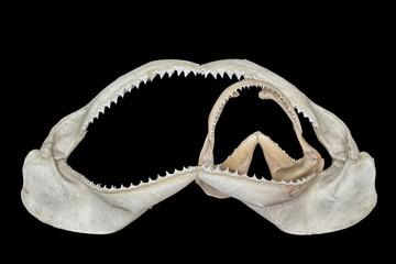 Mascelle di squalo