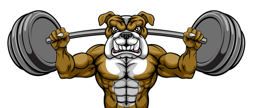 A bulldog dog animal body builder sports mascot weight lifting a barbell