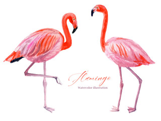 Card with watercolor illustration of elegant pink flamingos isolated on white background