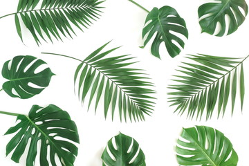 Tuinposter Palm boom tropical green palm, monstera leaves , branches pattern isolated on a white background. top view.copy space.abstract.