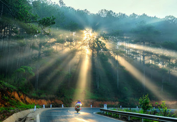 Cars or Motorcyclists driving on  country road through pine forests with rays shining on the foggy beautiful road, this is a beautiful road in Da Lat, Vietnam.