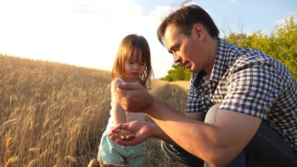 Dad is an agronomist and small child is playing with grain in a bag on wheat field. father farmer plays with little son, daughter in field. grain of wheat in hands of child. Agriculture concept.