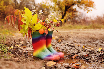 rubber boots rainbow color with a bouquet of yellow leaves and autumn flowers in a puddle and dirt on the background of yellow trees and forests.