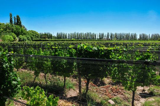 winenery in Lujan de Cuyo