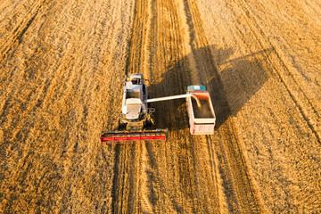 Combine harvester pouring wheat grain into truck