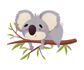 Cute koala cartoon lies on a branch. Vector illustration on white background.