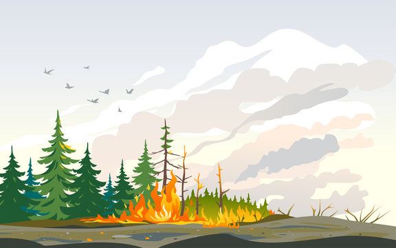 Burning forest spruces in fire flames, nature disaster concept illustration background, poster danger, careful with fires in the woods