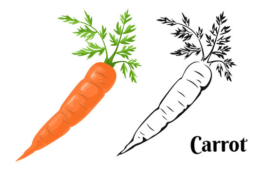 Carrot Set. Cartoon orange carrot isolated on a white background and black and white illustration. Vector icons of fresh root vegetables.