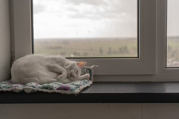 A small white cat sleeping in a strange pose peacefully on its bedding on a windowsill in a Scandinavian interior. Outside the window there is a thunderstorm, clouds and rain.
