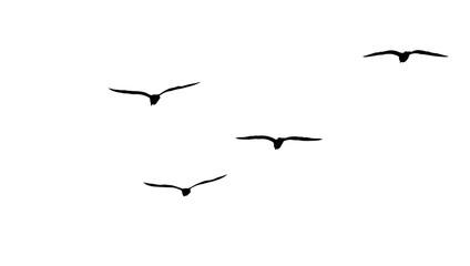 Fototapeta flock of migratory seagulls, silhouette obraz