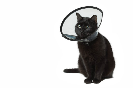 Black cat in the plastic collar which is put on on a neck during the postoperative period. The pet sits on the white isolated background