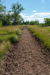 Footprints in Dirt Path Lined with Tall Green Grasses